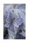 蝶が舞う華やかなチュールスカート